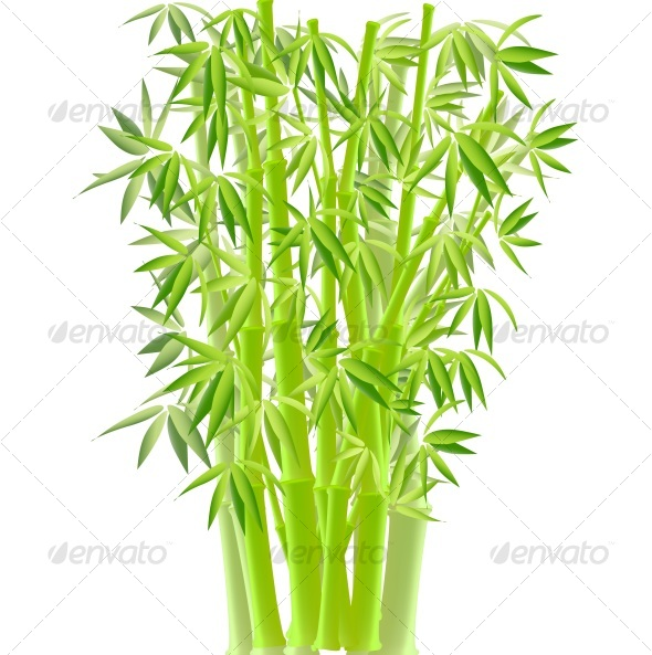 GraphicRiver VECTOR ILLUSTRATION OF BAMBOO 58245
