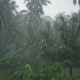 Tropical Downpour In The Jungle