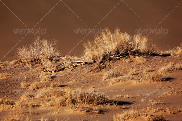Sand desert in national park Altyn-Emel, Kazakhstan - Stock Photo - Images