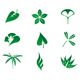 Set of leaves icons - GraphicRiver Item for Sale