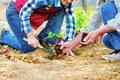 Close up of unrecognizable senior couple planting little seedling