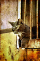 Cat on grunge background - PhotoDune Item for Sale