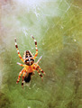 Spider on grunge background - PhotoDune Item for Sale