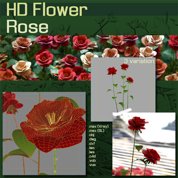 3DOcean HD Flower Roses 1489440