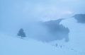foggy morning in snowy mountains