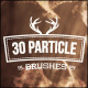 30 Particle Brushes