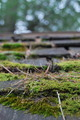 Moss Covered Roof - PhotoDune Item for Sale