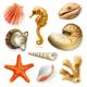 Seashells Icons