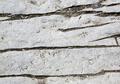 Close up gray rock cracked