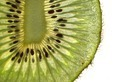 kiwi background - PhotoDune Item for Sale