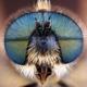 flyhead