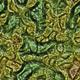 Alien Organic Texture