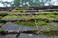 Moss Covered Roof pt2 - PhotoDune Item for Sale