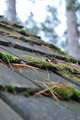 Moss Covered Roof 3 - PhotoDune Item for Sale