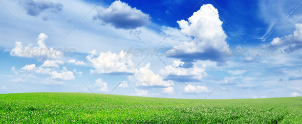 meadow - Stock Photo - Images