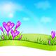 Violet Crocus and Green Grass