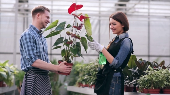 how to take care of anthurium