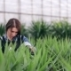 Female Florist Caring For Yucca Plant.