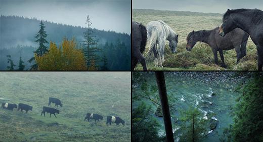 Rugged Wilderness
