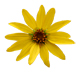 Yellow Flower - GraphicRiver Item for Sale