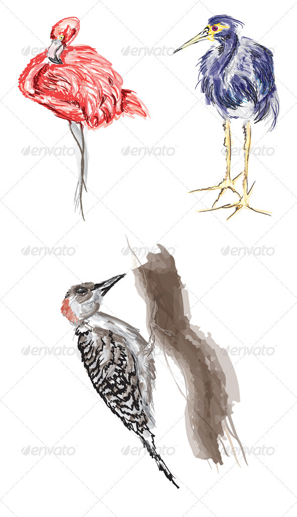 Illustrated Tropical Birds - Animals Characters