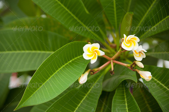 Yellow and white flowers. - Stock Photo - Images