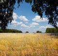 Grassland - PhotoDune Item for Sale