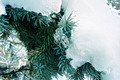 Snow and Ice on a pine tree - PhotoDune Item for Sale