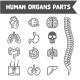 Human Internal Organs Detailed Icons Set.