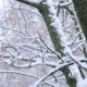 Slanting Snow Falls On Background Of Tree Crown In Winter Day