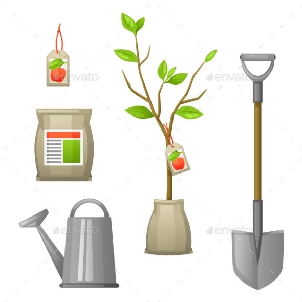 Set of Seedling Fruit Tree