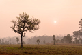 Silhouette of tree with sunrise and morning mist
