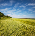 Green field - PhotoDune Item for Sale