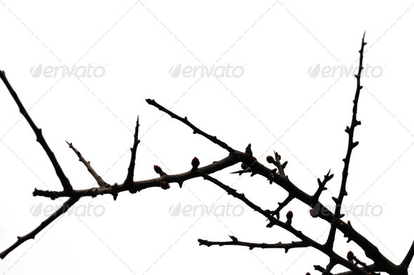 twigs silhouette - Stock Photo - Images