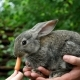 Rabbit. Feeding Animal