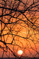 Branch silhouette sunset
