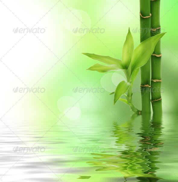 PhotoDune Zen Bamboo 1564139