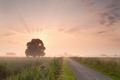 rural summer sunrise