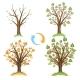 Apple Tree Seasonal Cycle