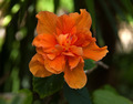 Orange Flower - PhotoDune Item for Sale