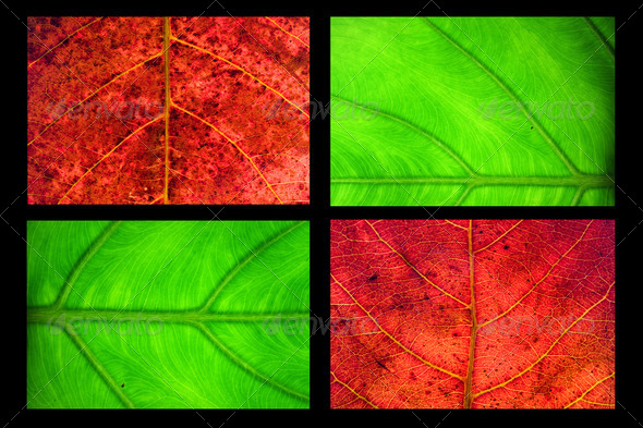 Merge leaf - Stock Photo - Images