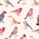 Colorful Songbirds Seamless