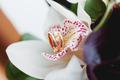 Golden wedding rings lie inside lily flower in the bouquet. Wedd