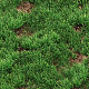 Grass seamless texture for CG