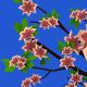 Low-Poly Set 13 Trees of 4 Seasons