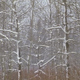Dead Snow Covered Trees - VideoHive Item for Sale