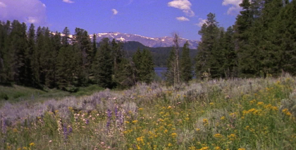 Meadow and Grand Teton 2