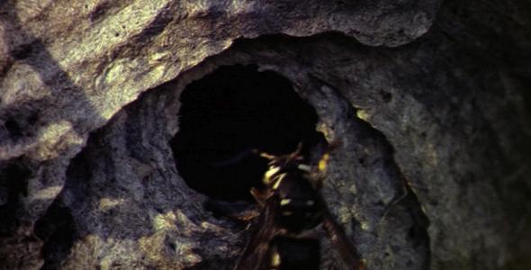 Close up of Nest