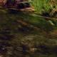 Marsh and Stream