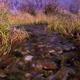 Marsh and Stream 2